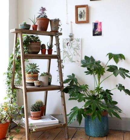 Dekor tipp: több növényt a lakásodba!