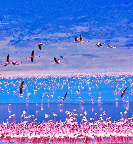 Flamingó láz