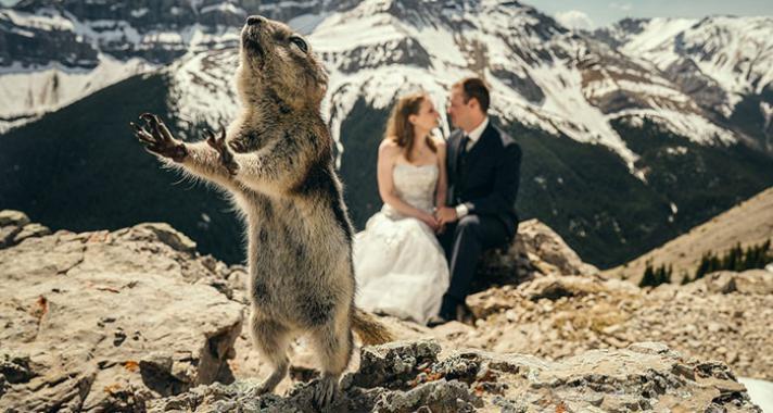15 esküvői fotó, amibe nagyon viccesen beletrollkodtak