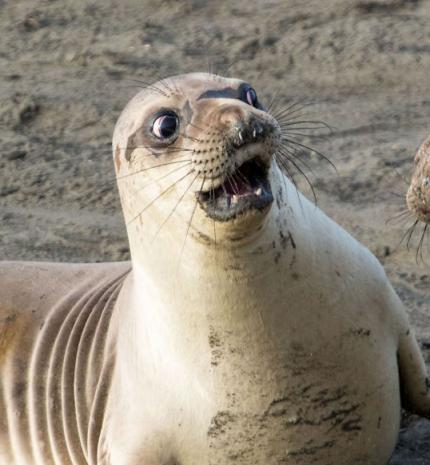 Az elmúlt év legviccesebb állatos fotói