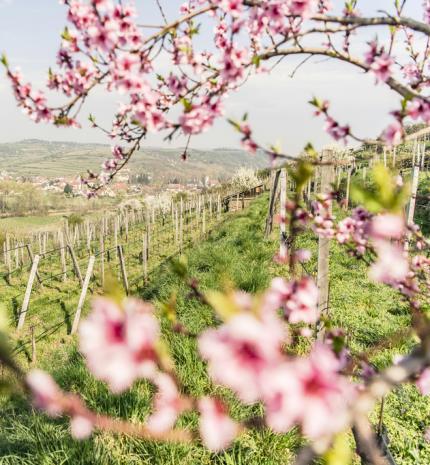 Tavaszi zsongás, megújulás Alsó-Ausztriában
