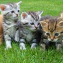 Állatvédelem - Amivel az év minden napján érdemes foglalkozni