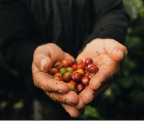 Miről ismerszik meg a minőségi szemes kávé?