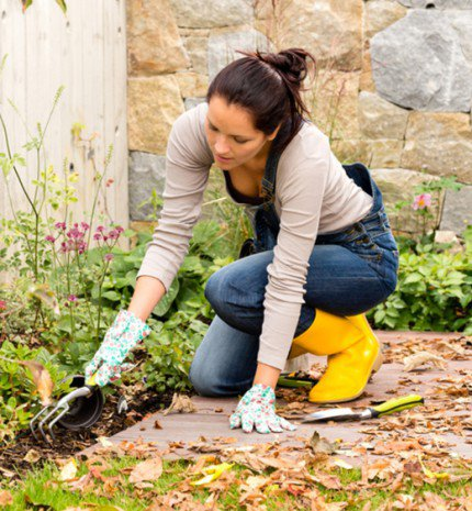 A kezdő kertészek 10 leggyakoribb hibája II. rész