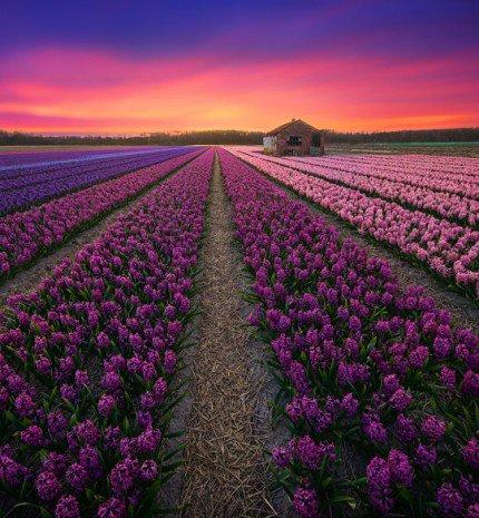 20 festői szépségű fénykép a különleges Hollandiáról