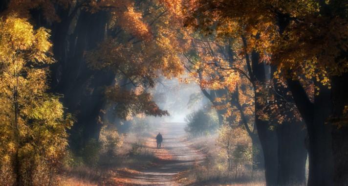 9 gyönyörű őszi fotó egy lengyel erdőről
