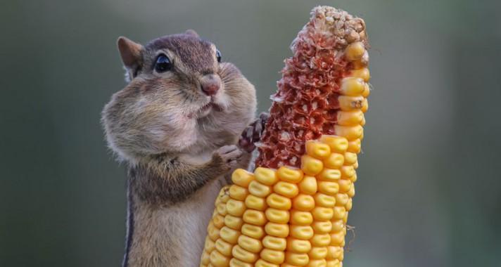 Top 10: A legviccesebb állatfotók az idei Comedy Wildlife Photography Awardsról