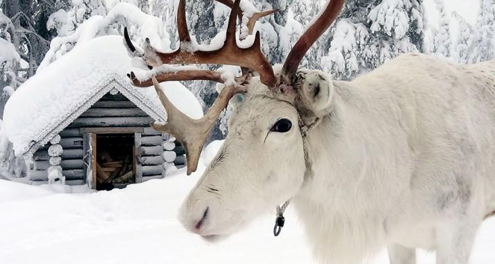 Lélegzetelállító természetfotók a csodálatos Lappföldről, télen