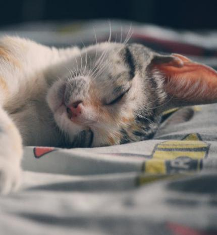 5 tény a cicákról