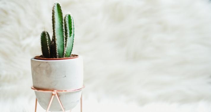 Kaktuszok, és a feng shui