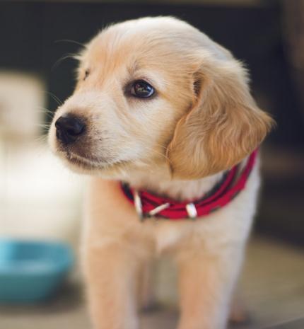 5 dolog, amit nem tudtál a kutyádról