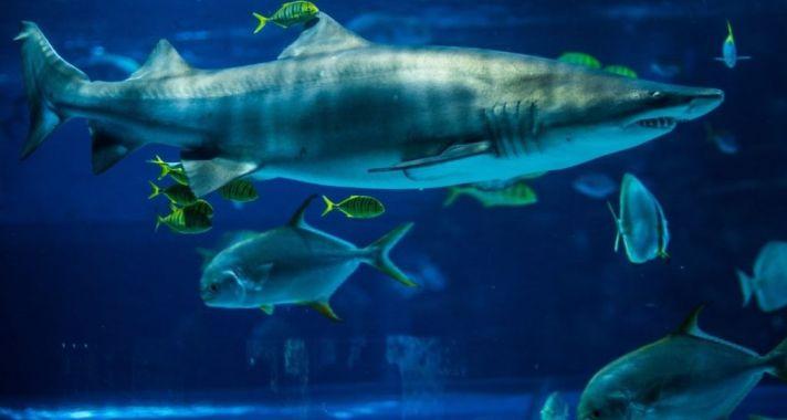 Két új akváriummal bővült a Tropicarium