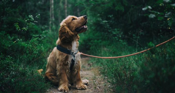 A kutya, mint legjobb barát