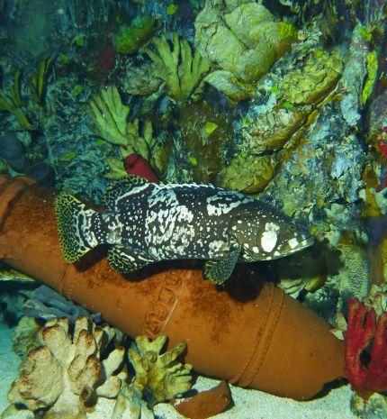 Kulisszatitkok: a halak eleségének előkészítése a Tropicariumban