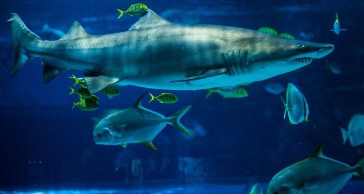 Kulisszatitkok: cápaetetés a Tropicariumban