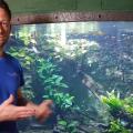 Kulisszatitkok: így rendeznek be egy akváriumot a Tropicariumban