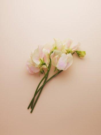 Az ellenállhatatlan ifjú nő új illata
