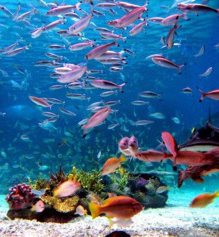 Az Óceánok Világnapja