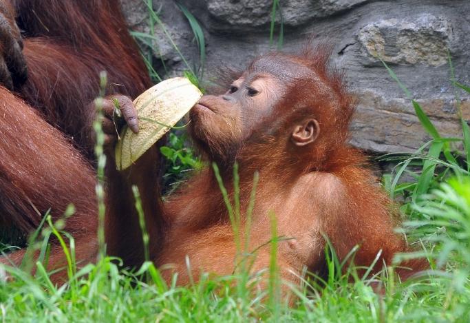 Országunk legnagyobb állatkertjei