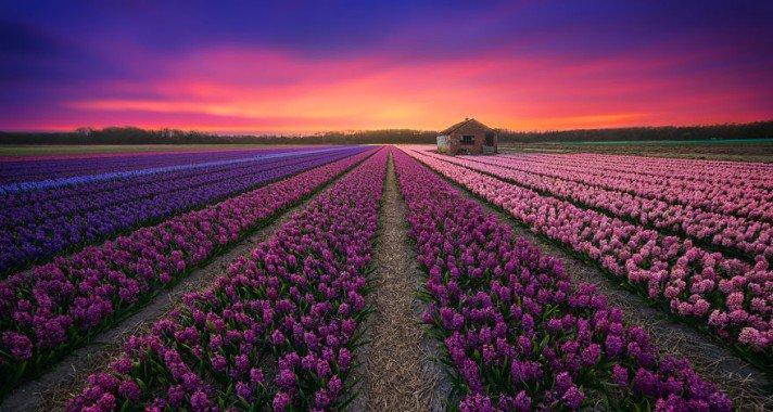Lenyűgöző Hollandia