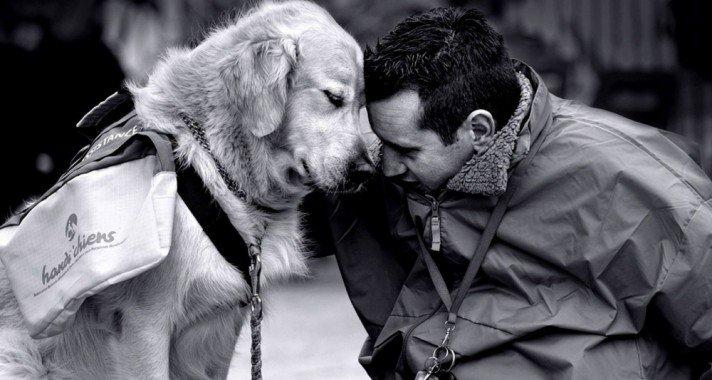 A boldog állatokért